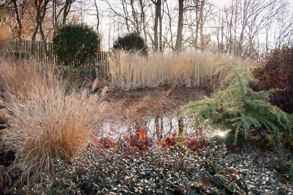 Der Teich im Winter