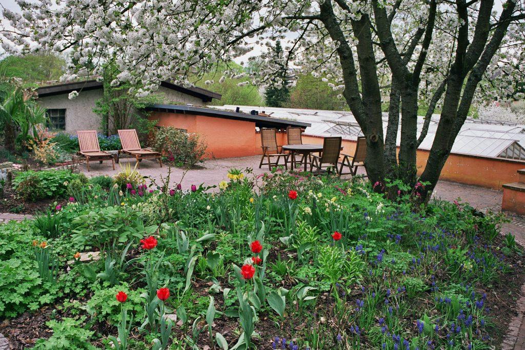 Der Garten unter dem Kirschbaum im April