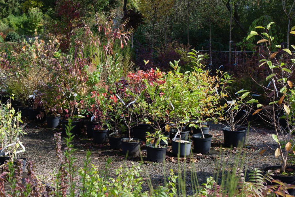 Containerpflanzen im Herbst