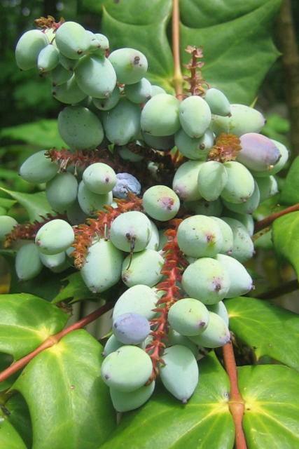 Früchte im Juli