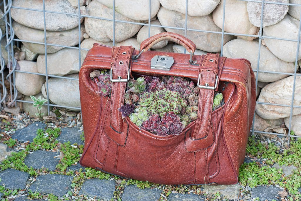 Omas alter Reisekoffer mit Dachwurz (Sempervivum) bepflanzt