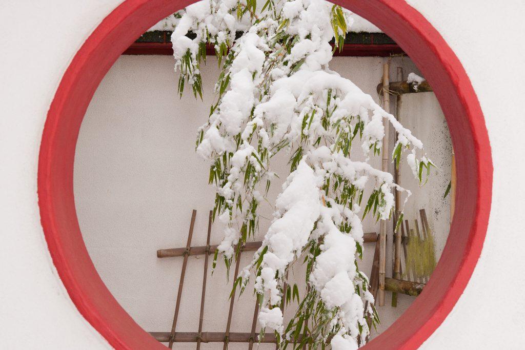 Die Schneelast drückt die Halme des Bambus in den Zen-Garten.