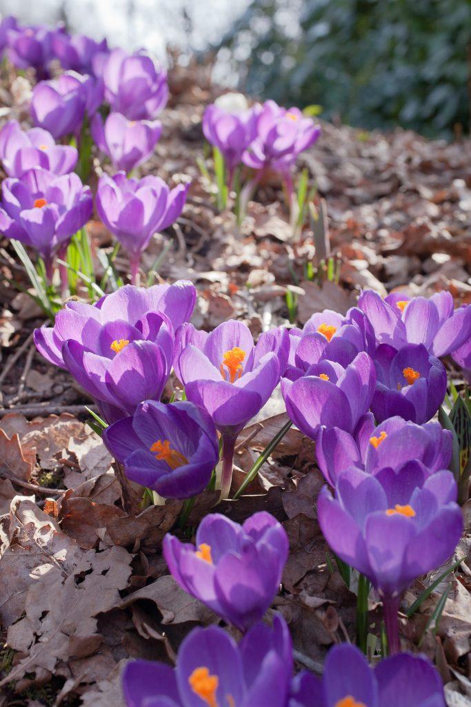 Sie sollten sich aber trotz all der Arbeit die Zeit nehmen Ihren Garten richtig zu genießen.