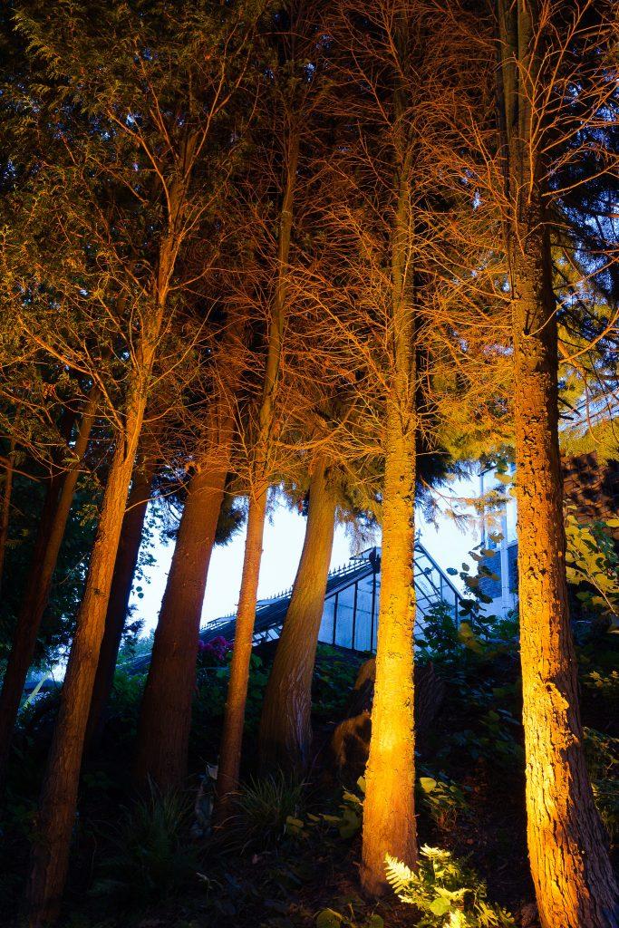 Mystische Lichtinstallation