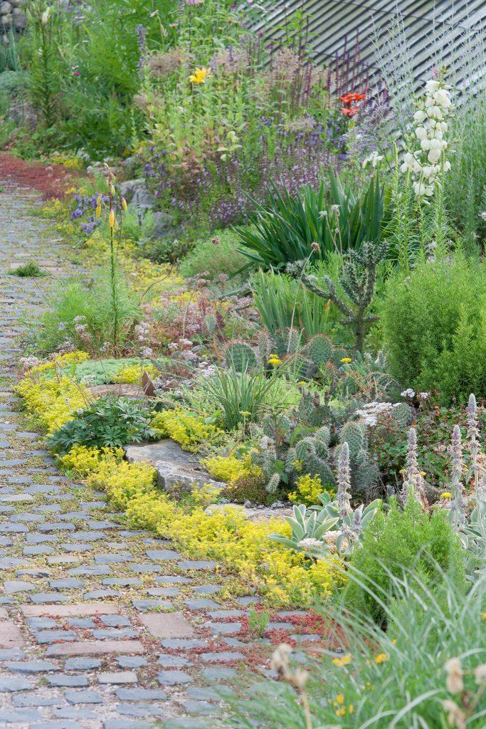 Der Kiesgarten Ende Juni