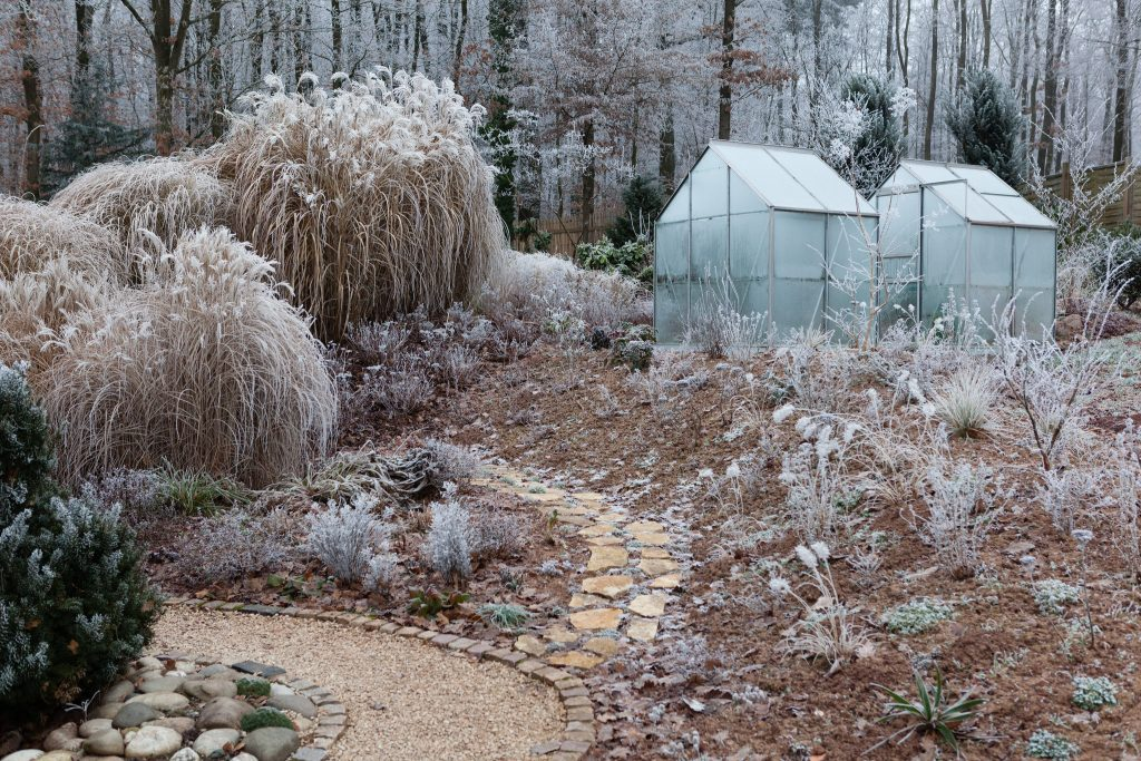 Mein (tiefgefrorener) Garten