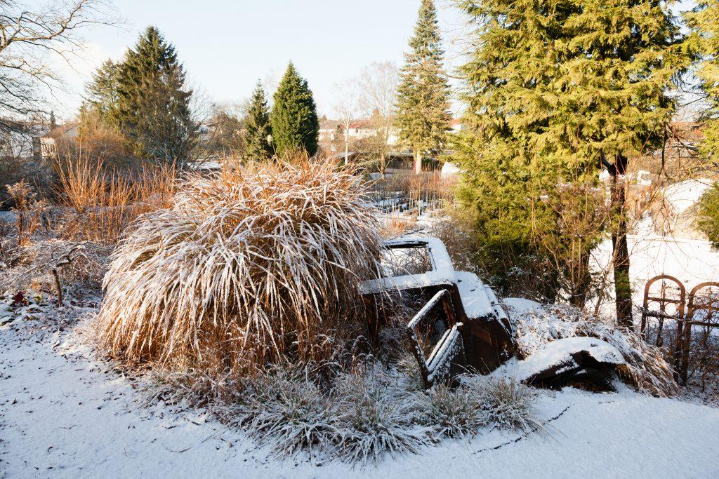 Ein prächtiges Solitärgras auch im Winter: Miscanthus sinensis 'Variegatus' (Weißbuntes Chinaschilf).