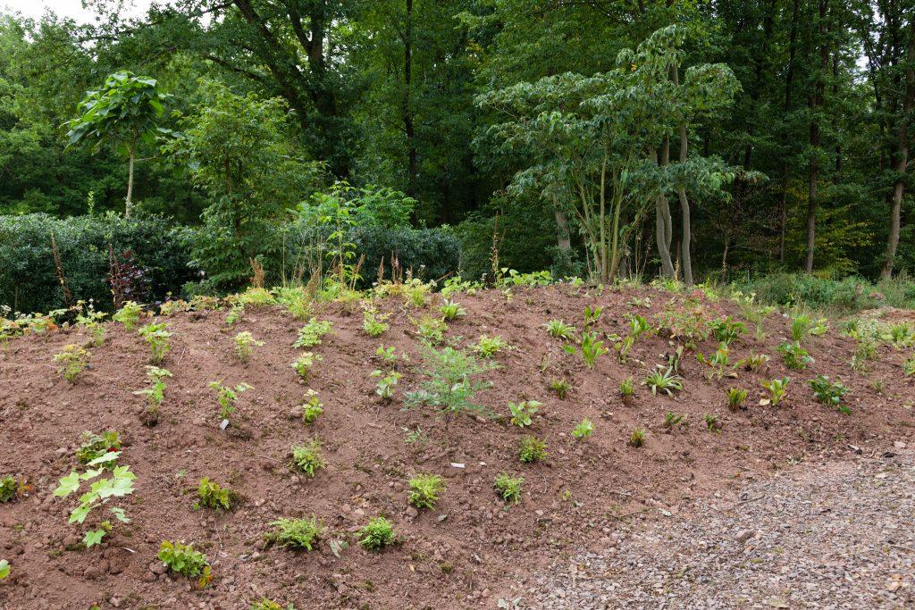 Frisch gepflanzt: Auserlesene Gehölze, Stauden, Farne und Gräser für schattigere Standorte.