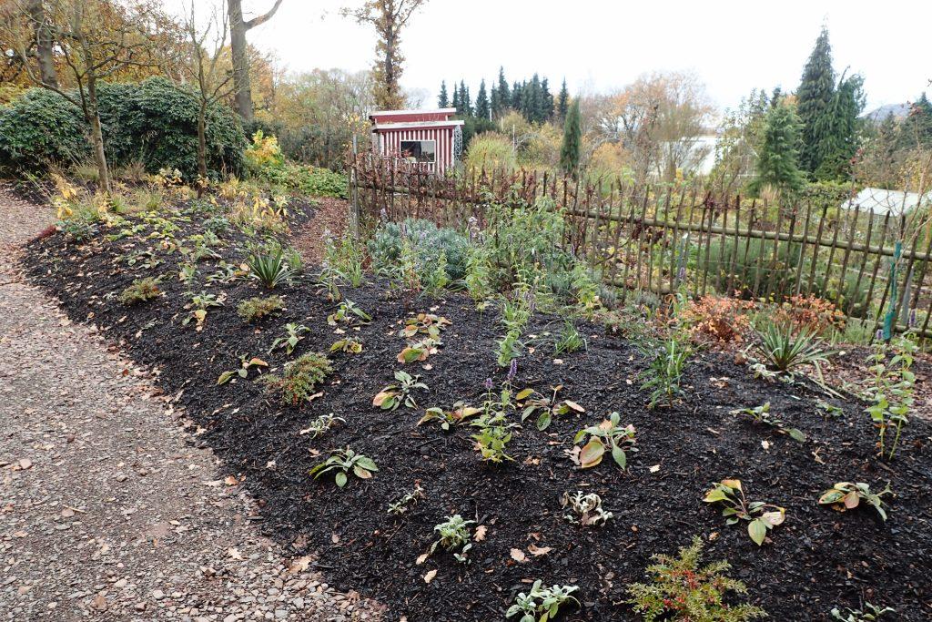 November: Vor dem Winter habe ich noch ein paar Blumenzwiebeln gepflanzt und die Beete mit Rindenhumus gemulcht.