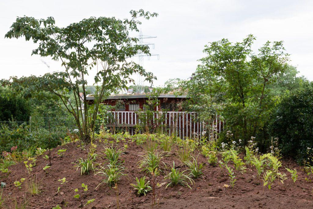 Cornus alternifolia (Wechselblättriger Hartriegel) und Acer triflorum (Dreiblütiger Ahorn) fanden als Solitärgehölze Verwendung.