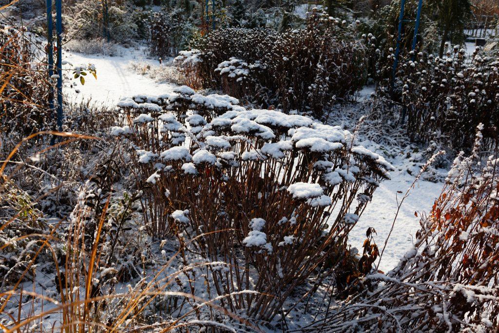 Gärten im Schnee