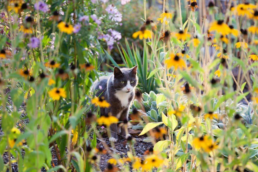 Auch unserer Mieze gefällt der Garten!