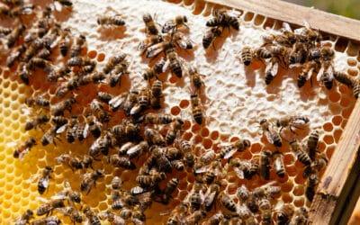 Zwei Bienenvölker halten Einzug in unsere Gärten