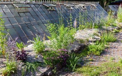 Der neue Kiesgarten
