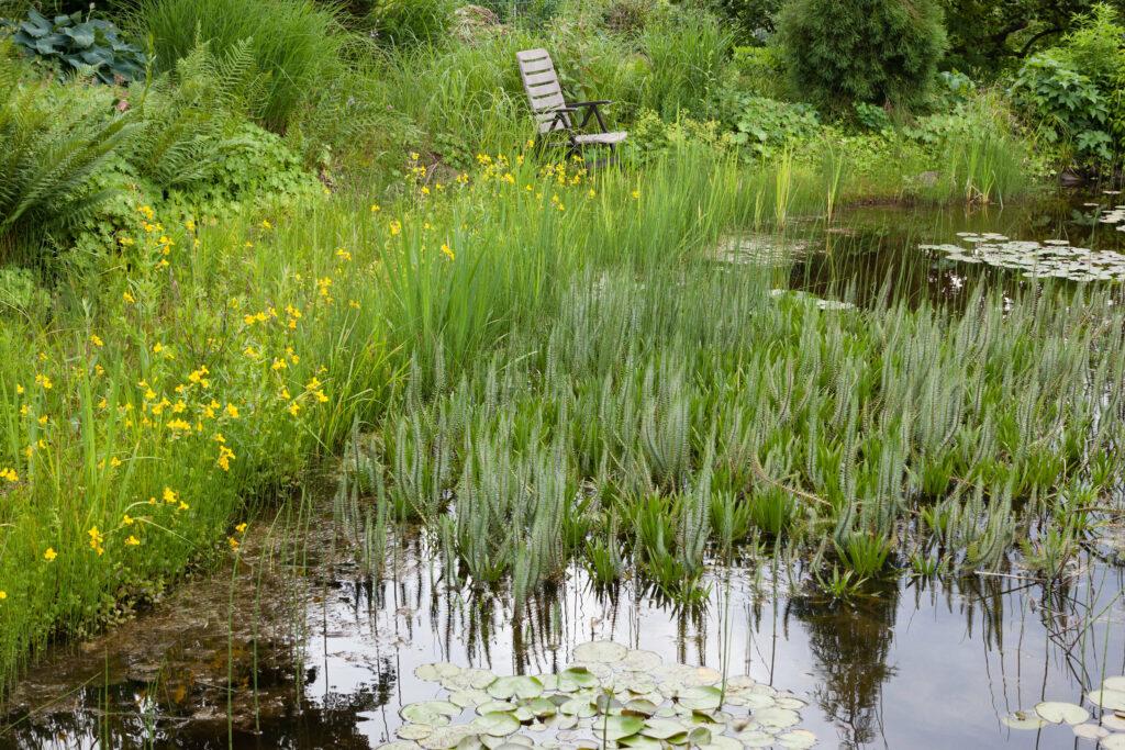 Der alte Teich